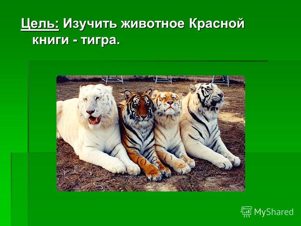 Цель: Изучить животное Красной книги - тигра.