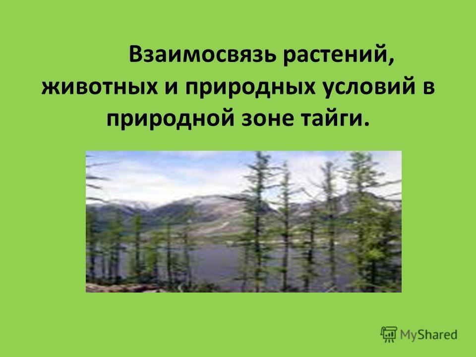 Взаимосвязь растений, животных и природных условий в природной зоне тайги.