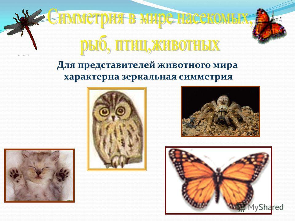 Для представителей животного мира характерна зеркальная симметрия
