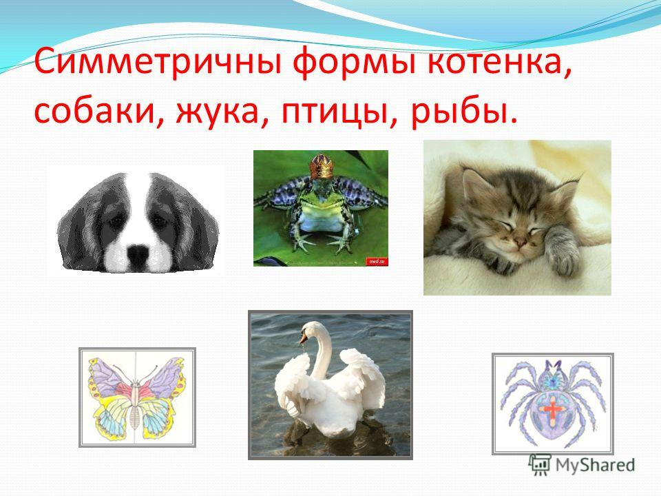 Симметричны формы котенка, собаки, жука, птицы, рыбы.