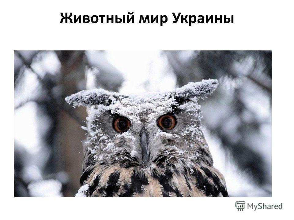 Животный мир Украины