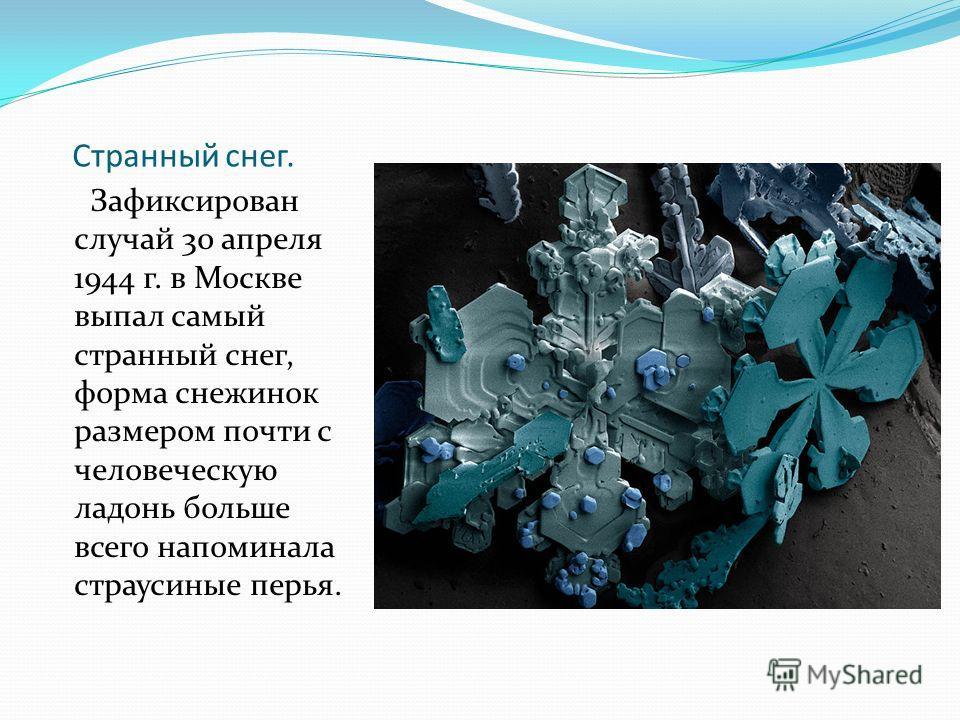 Странный снег. Зафиксирован случай 30 апреля 1944 г. в Москве выпал самый странный снег, форма снежинок размером почти с человеческую ладонь больше всего напоминала страусиные перья.