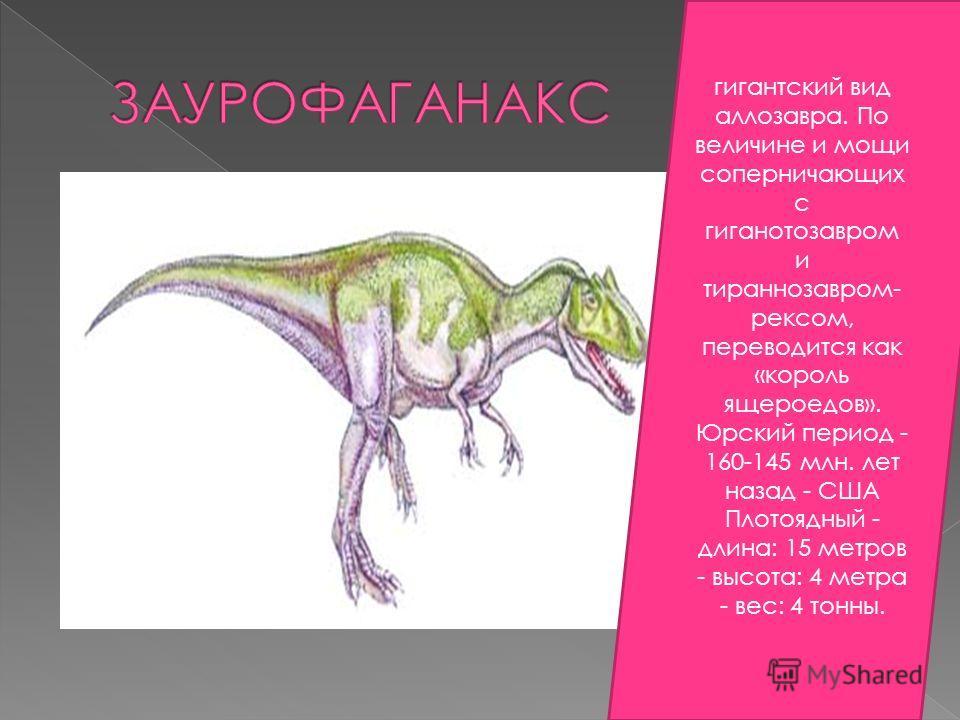 гигантский вид аллозавра. По величине и мощи соперничающих с гиганотозавром и тираннозавром- рексом, переводится как «король ящероедов». Юрский период - 160-145 млн. лет назад - США Плотоядный - длина: 15 метров - высота: 4 метра - вес: 4 тонны.
