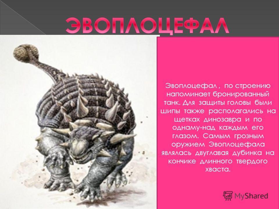 Эвоплоцефал, по строению напоминает бронированный танк. Для защиты головы были шипы также располагались на щетках динозавра и по однаму-над каждым его глазом. Самым грозным оружием Эвоплоцефала являлась двуглавая дубинка на кончике длинного твердого