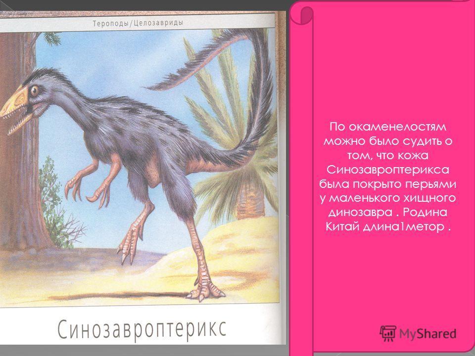 По окаменелостям можно было судить о том, что кожа Синозавроптерикса была покрыто перьями у маленького хищного динозавра. Родина Китай длина1метор.