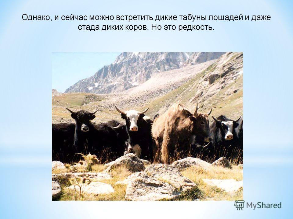 Однако, и сейчас можно встретить дикие табуны лошадей и даже стада диких коров. Но это редкость.