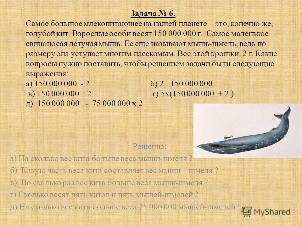 Задача 6. Самое большое млекопитающее на нашей планете – это, конечно же, голубой кит. Взрослые особи весят 150 000 000 г. Самое маленькое – свиноносая летучая мышь. Ее еще называют мышь-шмель, ведь по размеру она уступает многим насекомым. Вес этой