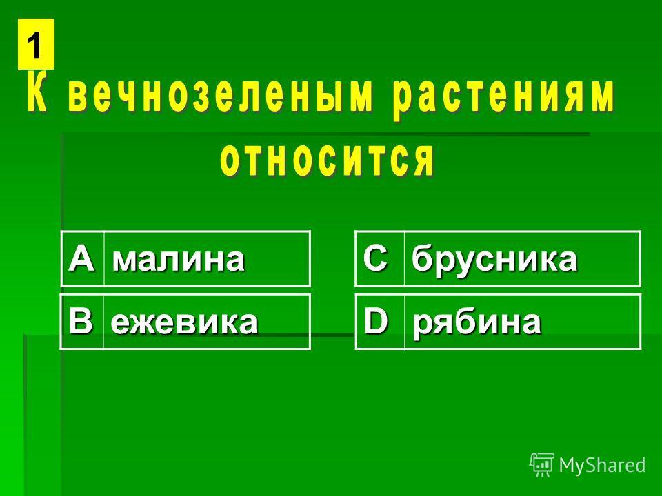 АмалинаСбрусника ВежевикаDрябина 1
