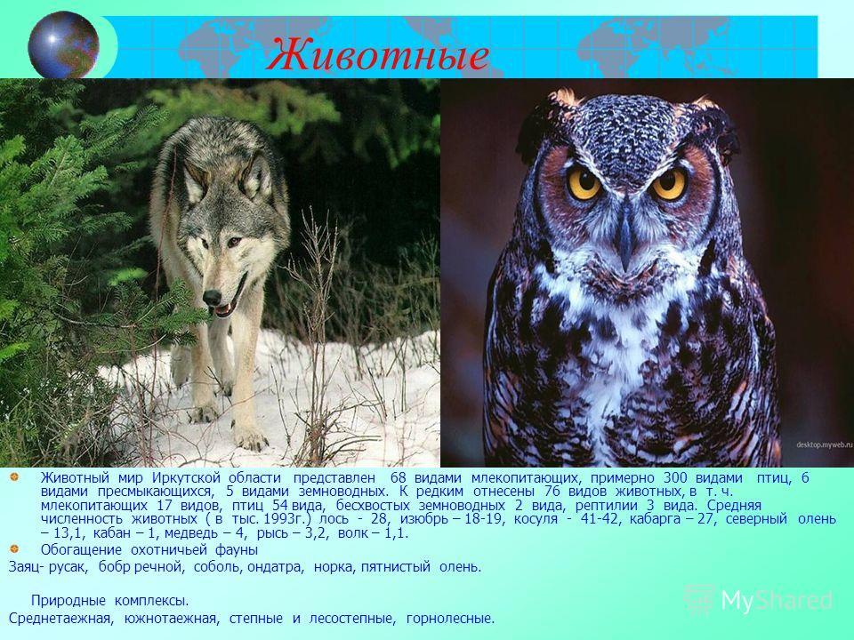 Животные Животный мир Иркутской области представлен 68 видами млекопитающих, примерно 300 видами птиц, 6 видами пресмыкающихся, 5 видами земноводных. К редким отнесены 76 видов животных, в т. ч. млекопитающих 17 видов, птиц 54 вида, бесхвостых земнов