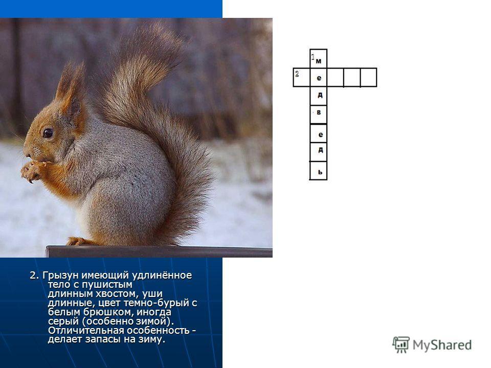 2. Грызун имеющий удлинённое тело с пушистым длинным хвостом, уши длинные, цвет темно-бурый с белым брюшком, иногда серый (особенно зимой). Отличительная особенность - делает запасы на зиму.