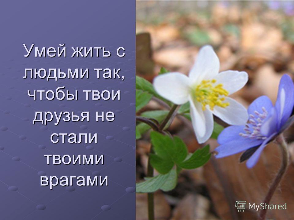 Умей жить с людьми так, чтобы твои друзья не стали твоими врагами