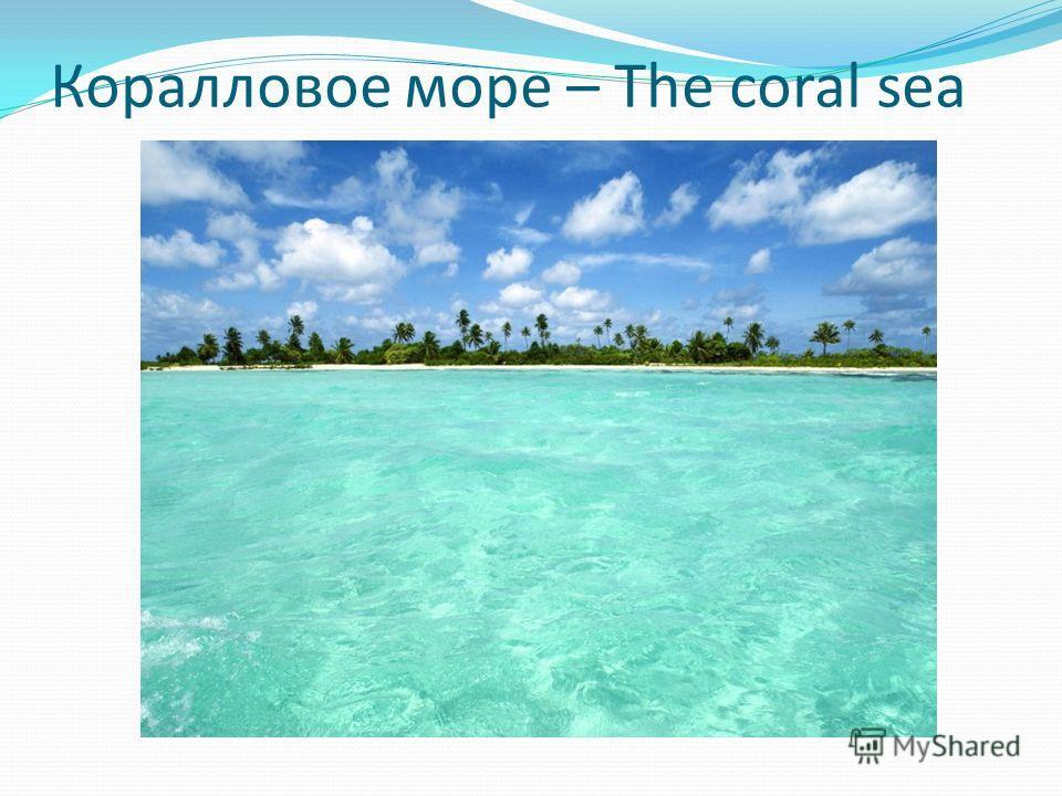 Коралловое море – The coral sea