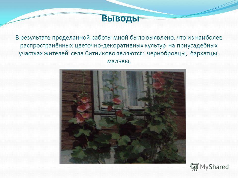 Выводы В результате проделанной работы мной было выявлено, что из наиболее распространённых цветочно-декоративных культур на приусадебных участках жителей села Ситниково являются: чернобровцы, бархатцы, мальвы,