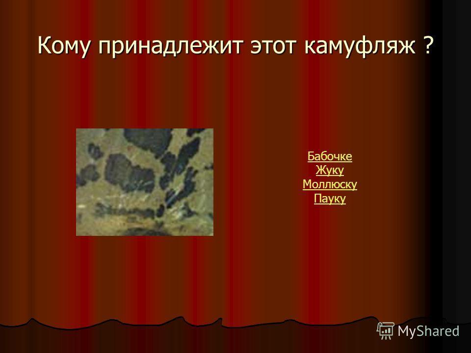 Кому принадлежит этот камуфляж ? Бабочке Жуку Моллюску Пауку