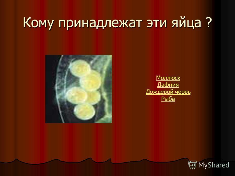 Кому принадлежат эти яйца ? Моллюск Дафния Дождевой червь Рыба