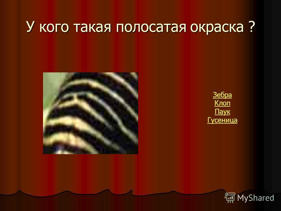 У кого такая полосатая окраска ? Зебра Клоп Паук Гусеница