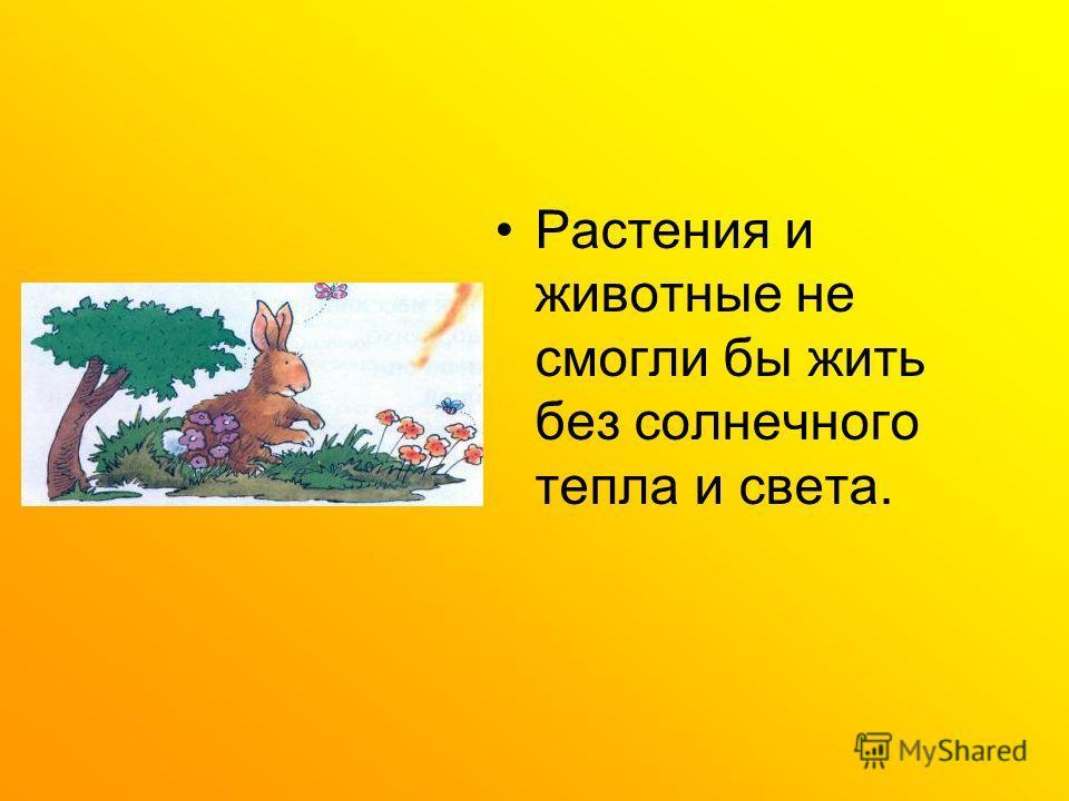 Растения и животные не смогли бы жить без солнечного тепла и света.