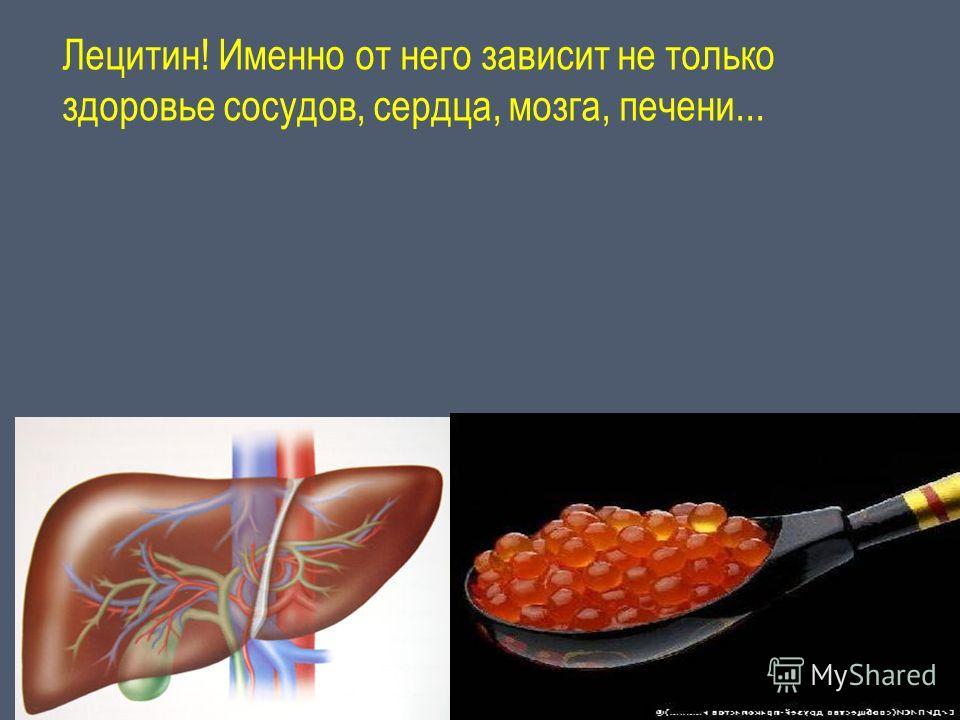 Лецитин! Именно от него зависит не только здоровье сосудов, сердца, мозга, печени...