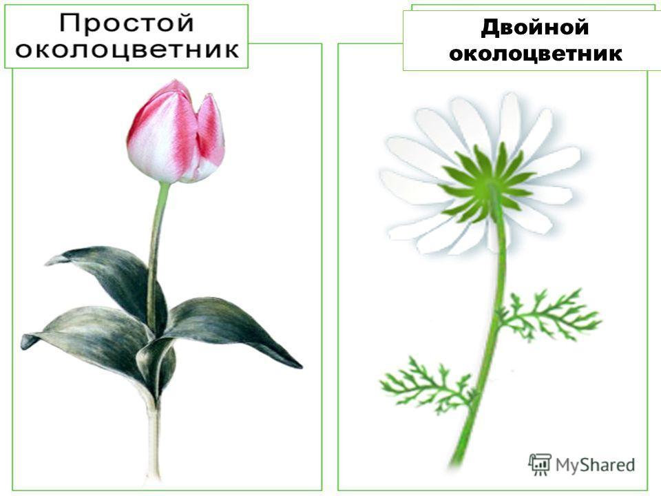 Рассмотрите схему строения цветка в задании 32 на стр. 19 рабочей тетради. Надпишите его части