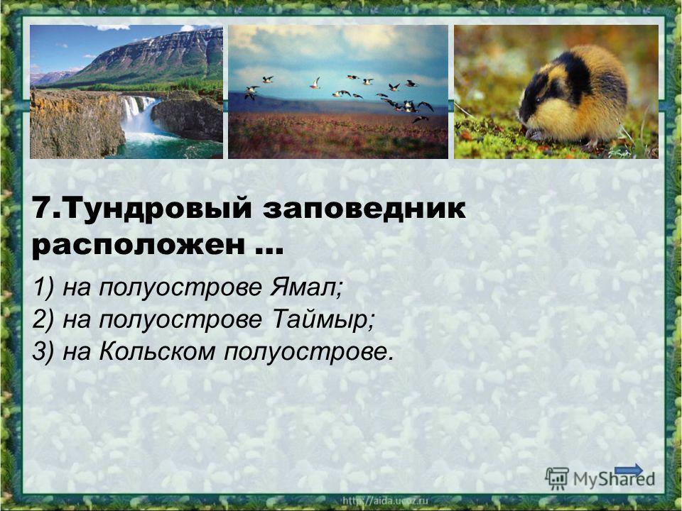 7.Тундровый заповедник расположен … 1) на полуострове Ямал; 2) на полуострове Таймыр; 3) на Кольском полуострове.