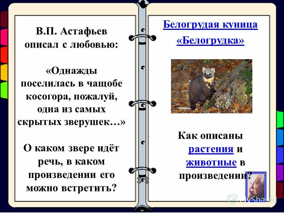 В.П. Астафьев описал с любовью: «Однажды поселилась в чащобе косогора, пожалуй, одна из самых скрытых зверушек…» О каком звере идёт речь, в каком произведении его можно встретить? Белогрудая куница «Белогрудка» Как описаны растения и животные в произ