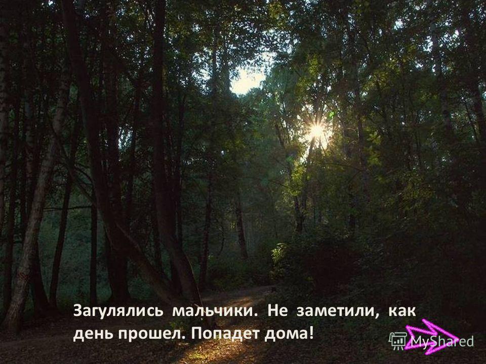 В лесу грибы, ягоды, птицы.