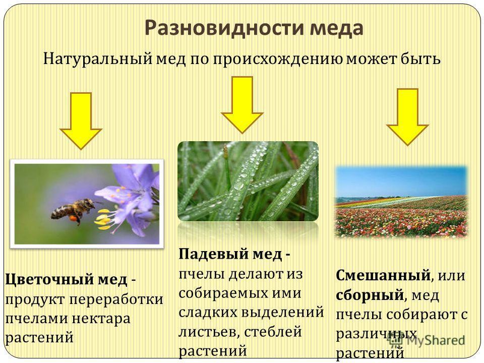 Разновидности меда Натуральный мед по происхождению может быть Цветочный мед - продукт переработки пчелами нектара растений Смешанный, или сборный, мед пчелы собирают с различных растений Падевый мед - пчелы делают из собираемых ими сладких выделений