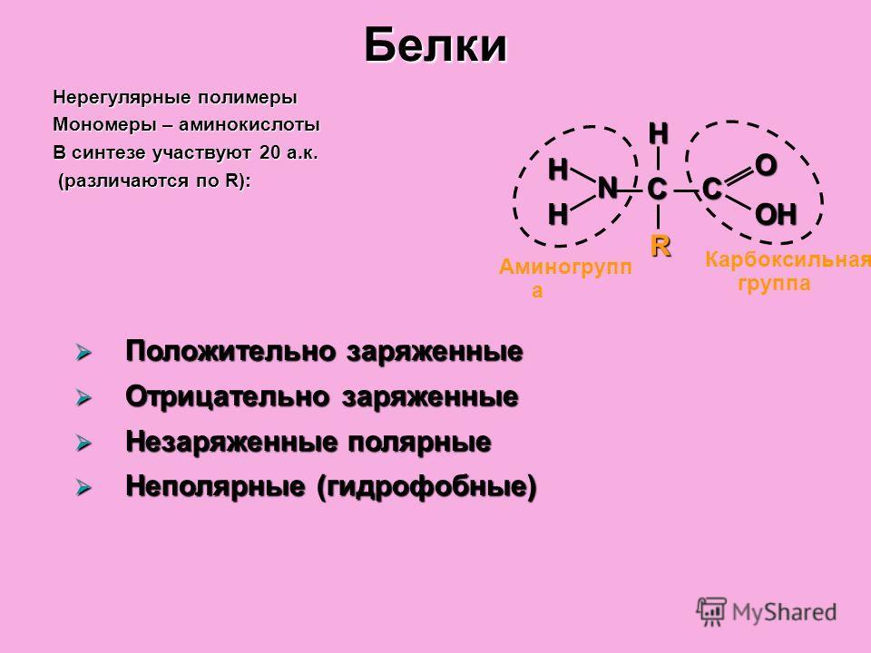 Белки Нерегулярные полимеры Мономеры – аминокислоты В синтезе участвуют 20 а.к. (различаются по R): (различаются по R): Аминогрупп а Карбоксильная группа СС H H H N O OH R Положительно заряженные Положительно заряженные Отрицательно заряженные Отрица