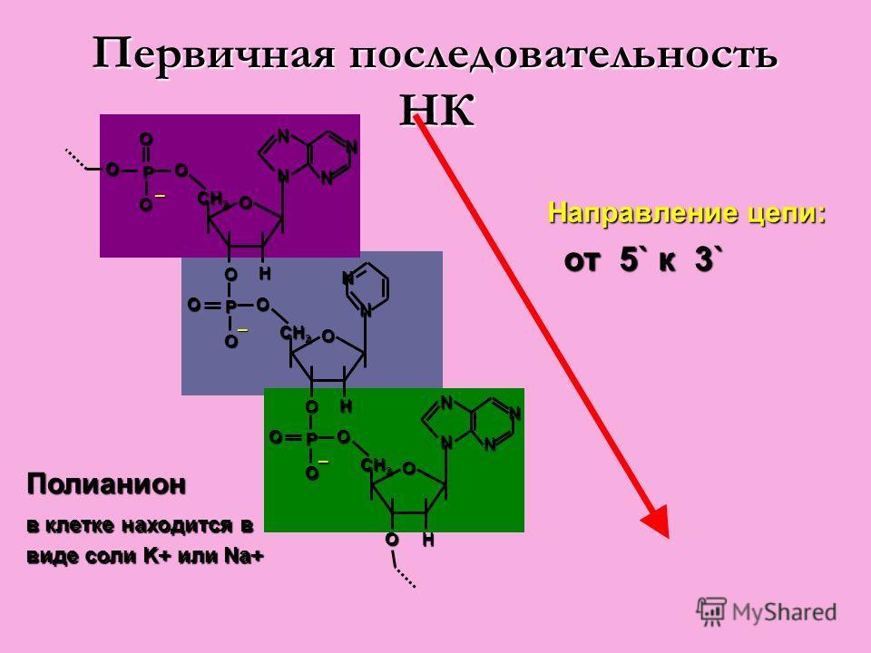 Первичная последовательность НК Направление цепи: от 5` к 3` от 5` к 3` Полианион в клетке находится в виде соли K+ или Na+
