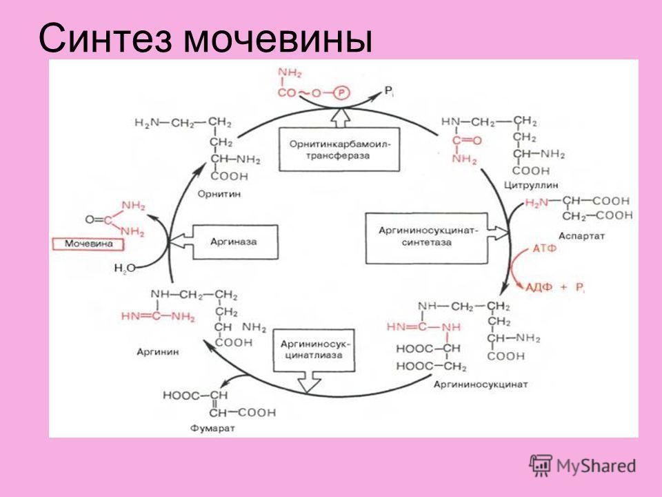 Синтез мочевины