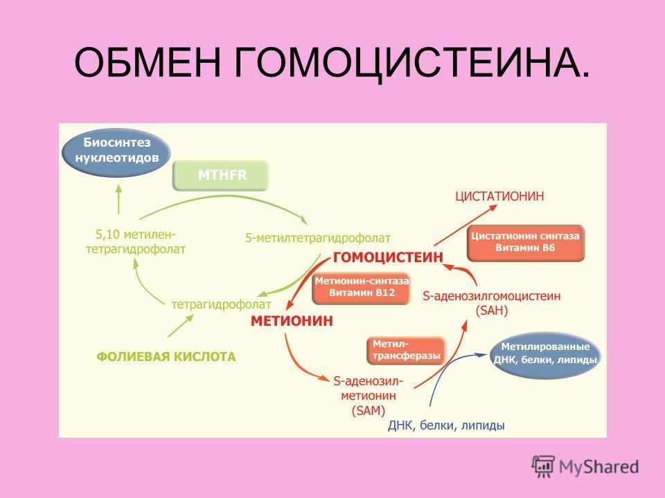 ОБМЕН ГОМОЦИСТЕИНА.