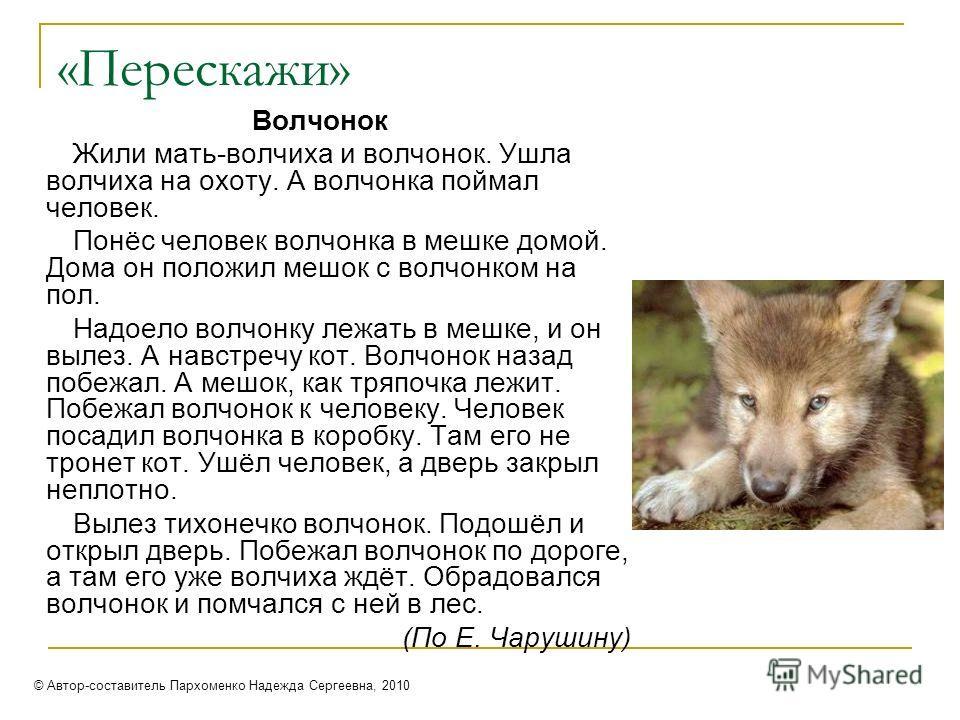 «Перескажи» Волчонок Жили мать-волчиха и волчонок. Ушла волчиха на охоту. А волчонка поймал человек. Понёс человек волчонка в мешке домой. Дома он положил мешок с волчонком на пол. Надоело волчонку лежать в мешке, и он вылез. А навстречу кот. Волчоно