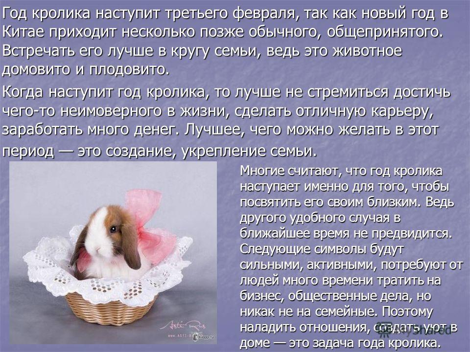 Год кролика наступит третьего февраля, так как новый год в Китае приходит несколько позже обычного, общепринятого. Встречать его лучше в кругу семьи, ведь это животное домовито и плодовито. Год кролика наступит третьего февраля, так как новый год в К