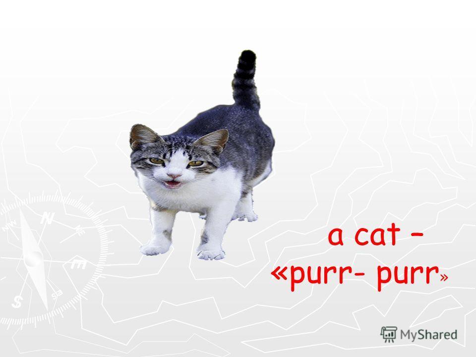 a cat – «purr- purr »