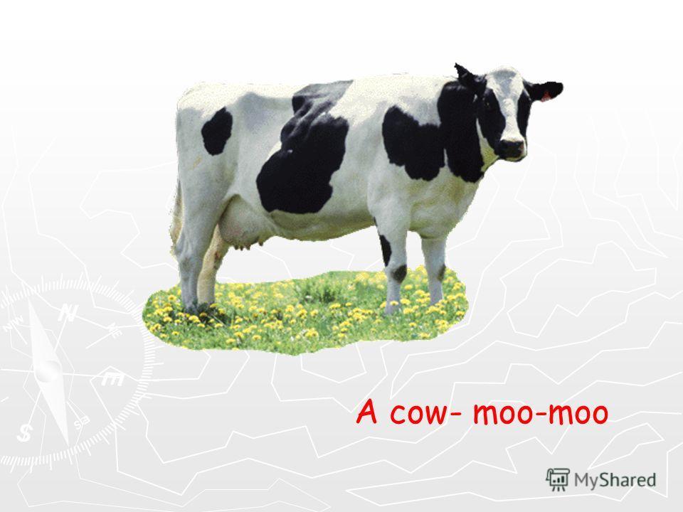 A cow- moo-moo
