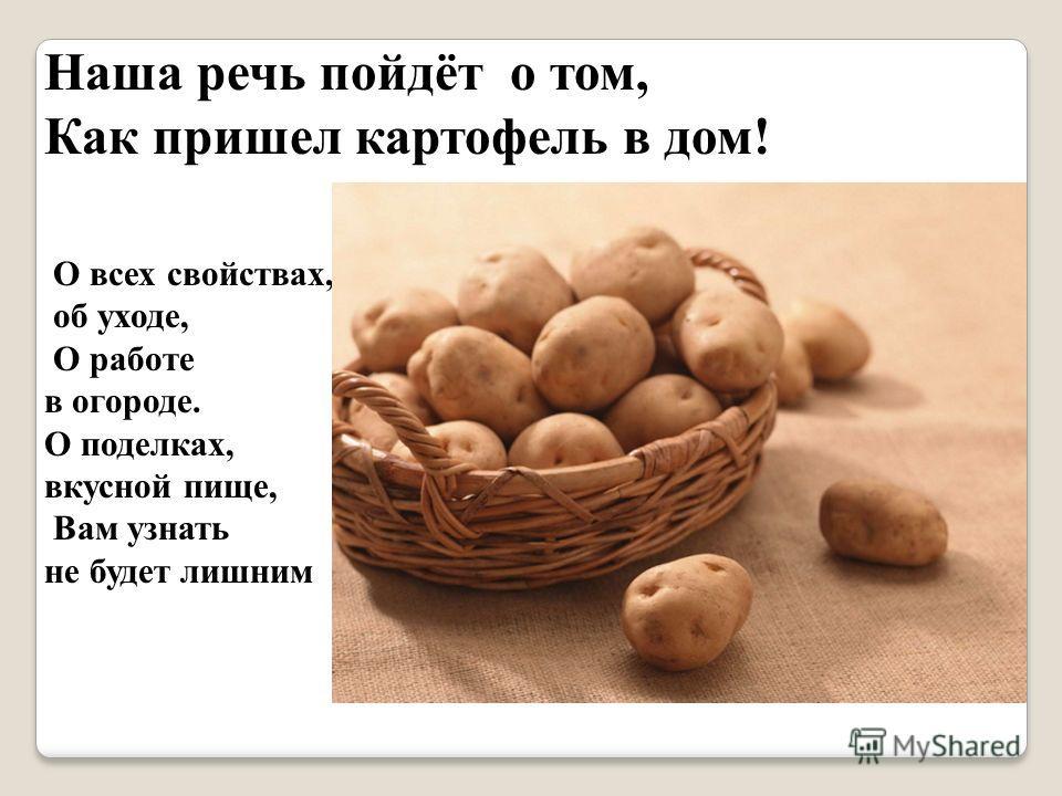 Наша речь пойдёт о том, Как пришел картофель в дом! О всех свойствах, об уходе, О работе в огороде. О поделках, вкусной пище, Вам узнать не будет лишним