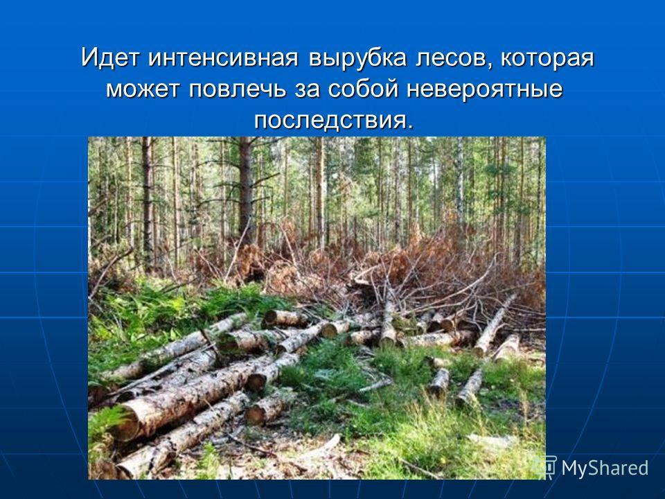 Идет интенсивная вырубка лесов, которая может повлечь за собой невероятные последствия. Идет интенсивная вырубка лесов, которая может повлечь за собой невероятные последствия.