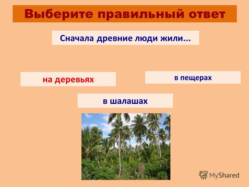 Выберите правильный ответ Сначала древние люди жили... на деревьях в пещерах в шалашах на деревьях