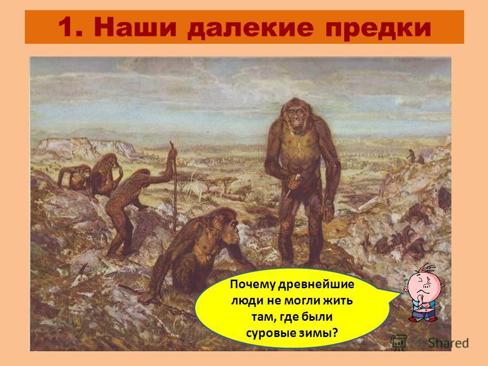 1. Наши далекие предки Почему древнейшие люди не могли жить там, где были суровые зимы?