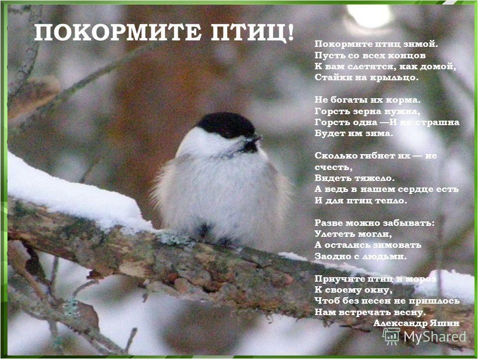Покормите птиц зимой. Пусть со всех концов К вам слетятся, как домой, Стайки на крыльцо. Не богаты их корма. Горсть зерна нужна, Горсть одна И не страшна Будет им зима. Сколько гибнет их не счесть, Видеть тяжело. А ведь в нашем сердце есть И для птиц