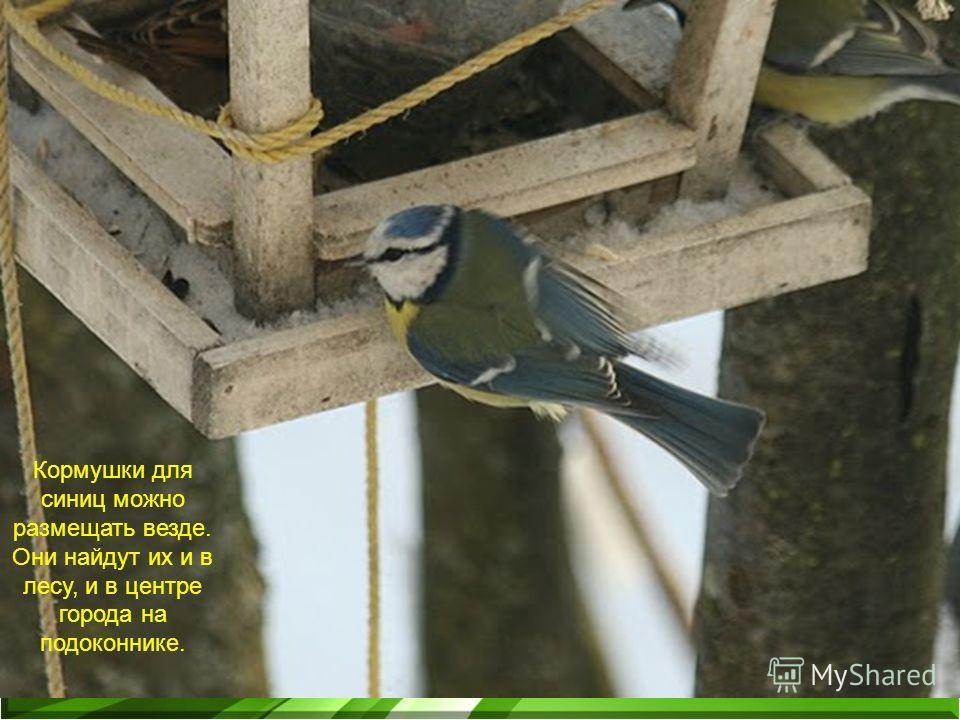 Кормушки для синиц можно размещать везде. Они найдут их и в лесу, и в центре города на подоконнике.