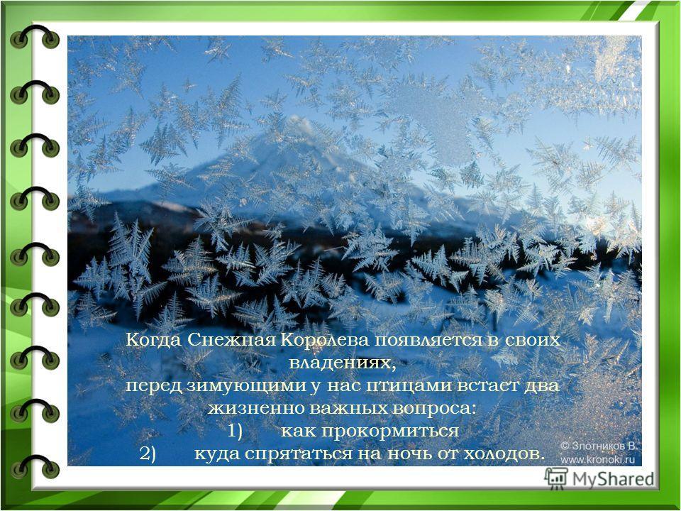 Когда Снежная Королева появляется в своих владениях, перед зимующими у нас птицами встает два жизненно важных вопроса: 1)как прокормиться 2)куда спрятаться на ночь от холодов.