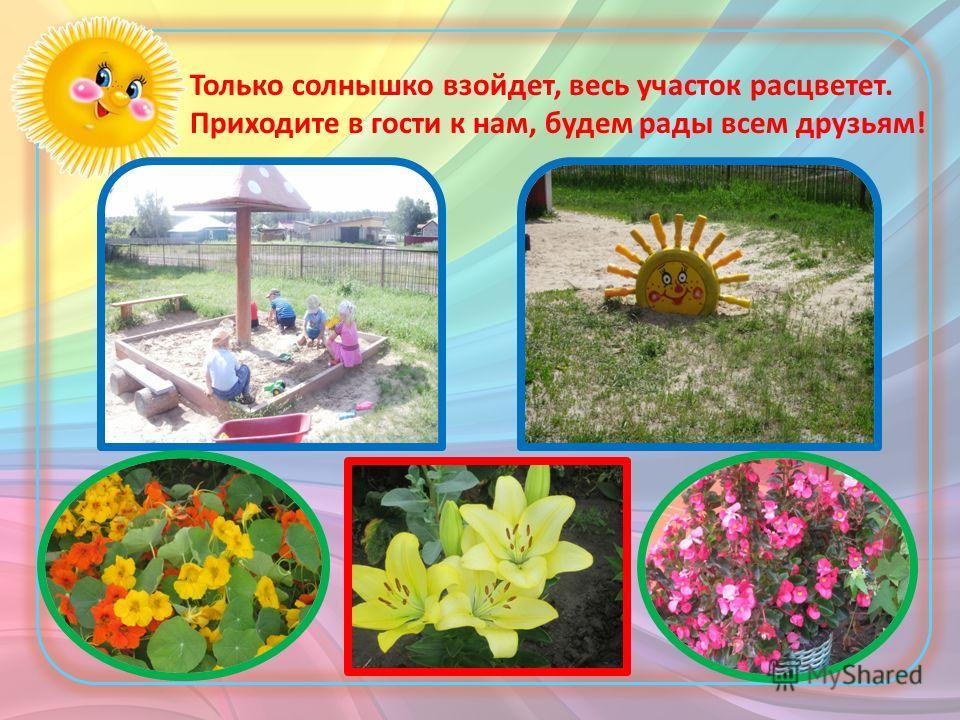 Только солнышко взойдет, весь участок расцветет. Приходите в гости к нам, будем рады всем друзьям!
