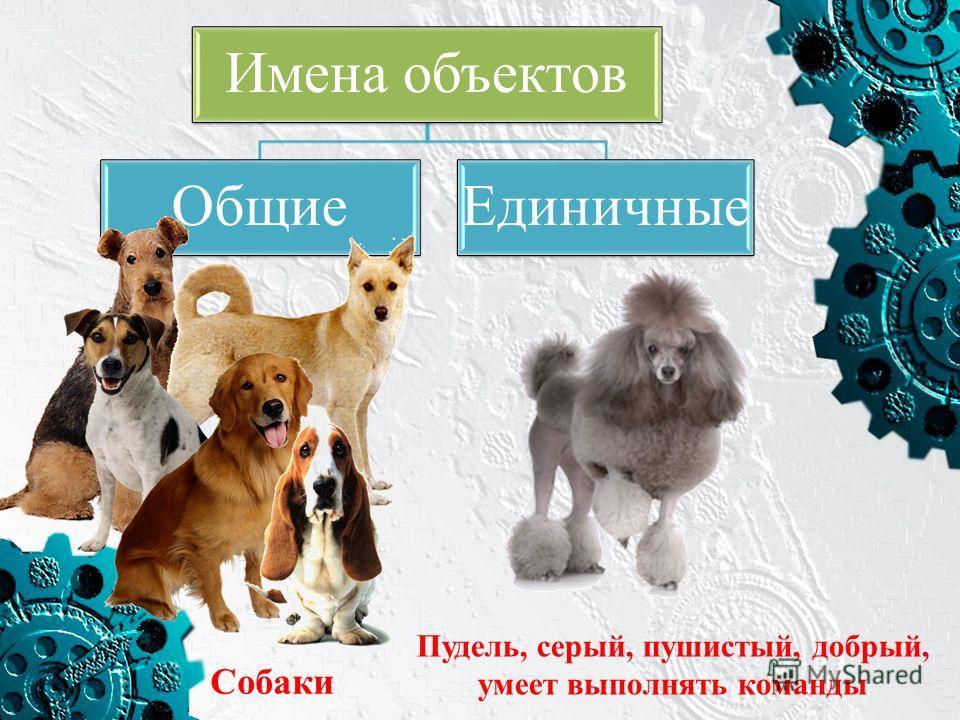Имена объектов ОбщиеЕдиничные Собаки Пудель, серый, пушистый, добрый, умеет выполнять команды