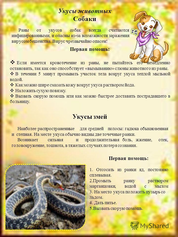 Укусы животных Собаки Раны от укусов собак всегда считаются инфицированными, и опасны из-за возможности заражения вирусом бешенства. Вирус чрезвычайно опасен! Первая помощь: Если имеется кровотечение из раны, не пытайтесь его немедленно остановить, т