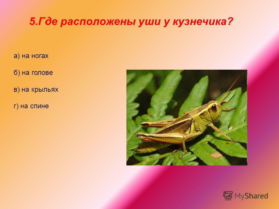 5.Где расположены уши у кузнечика? а) на ногах б) на голове в) на крыльях г) на спине