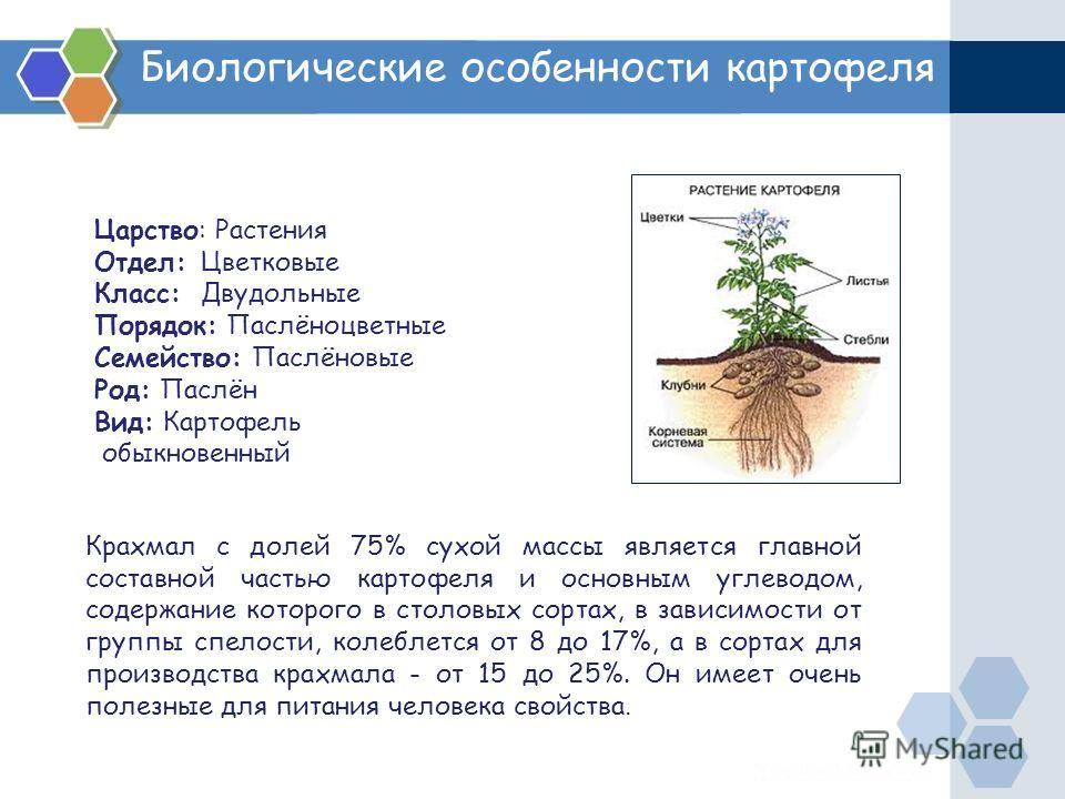 Биологические особенности картофеля Царство: Растения Отдел: Цветковые Класс: Двудольные Порядок: Паслёноцветные Семейство: Паслёновые Род: Паслён Вид: Картофель обыкновенный Крахмал с долей 75% сухой массы является главной составной частью картофеля