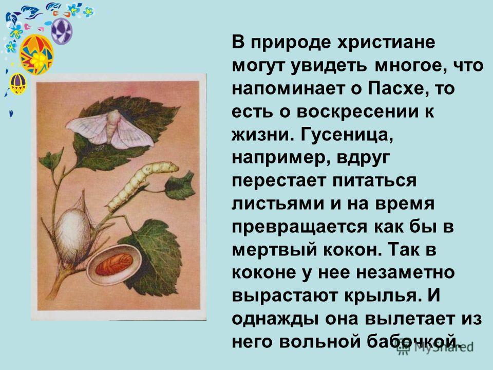 В природе христиане могут увидеть многое, что напоминает о Пасхе, то есть о воскресении к жизни. Гусеница, например, вдруг перестает питаться листьями и на время превращается как бы в мертвый кокон. Так в коконе у нее незаметно вырастают крылья. И од