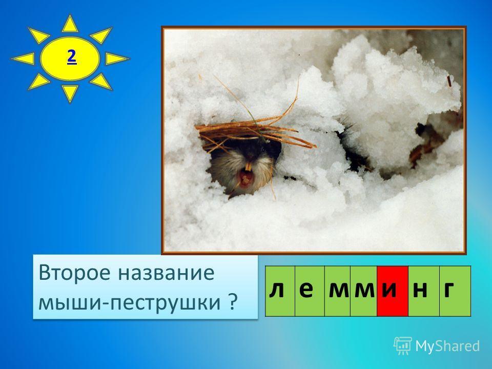 Второе название мыши-пеструшки ? Второе название мыши-пеструшки ? 2 лемминг