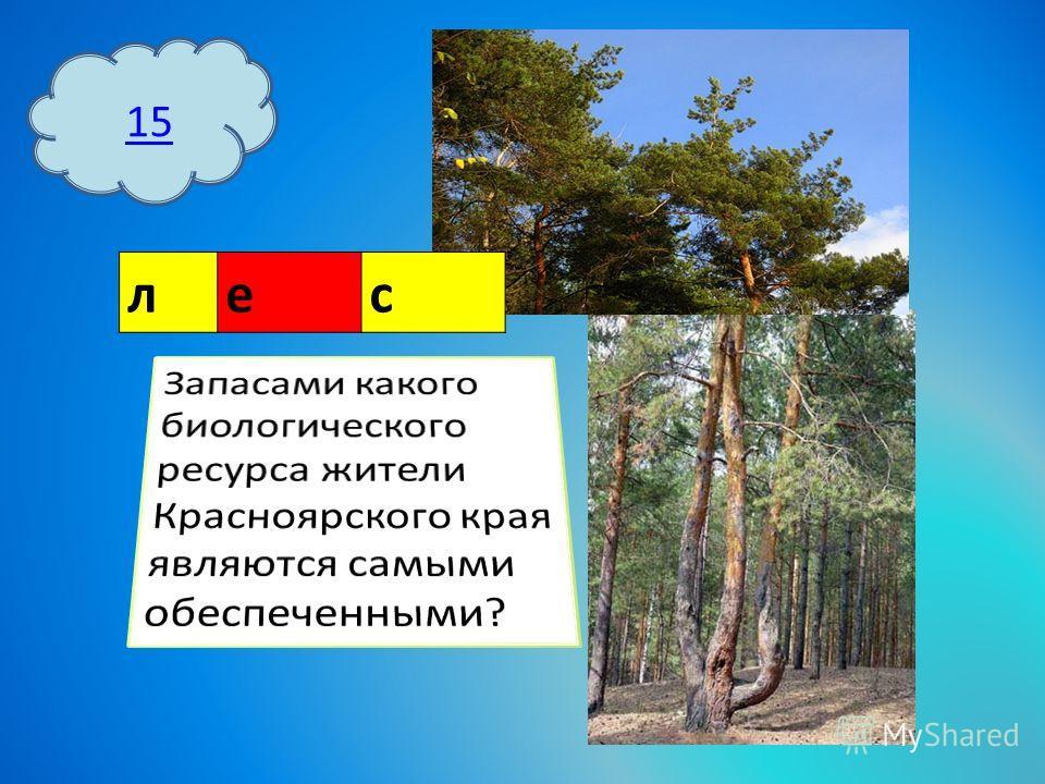 15 лес